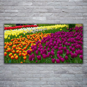 120 x 60 All Colors Tulips