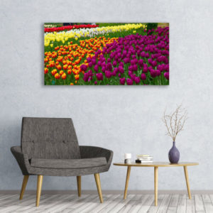 120 x 60 All Colors Tulips 1